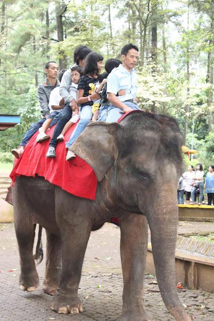 wahana rekreasi kebun binatang bandung5