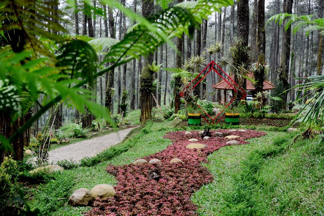 Orchid Forest Perpaduan Tempat Wisata Dengan Konservasi Alam