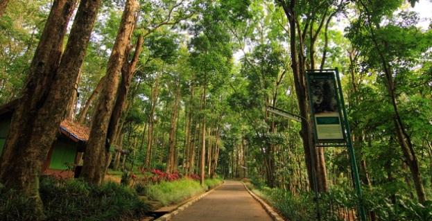 Melepas Penat Dengan Berjalan-jalan Di Taman Hutan Raya Ir. H. Juanda |  infobdg.com